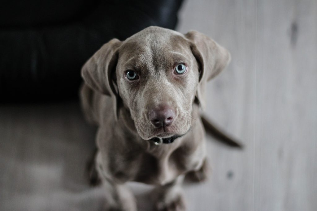פסיכולוג כלבים