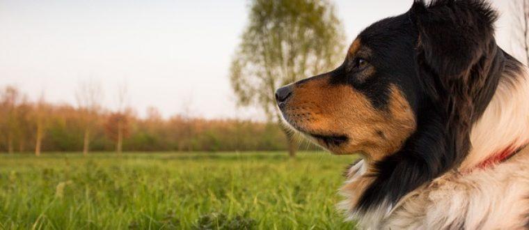 """הכשרת מאלפי כלבים: כך תהיו """"פסיכולוגים לכלבים"""""""